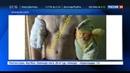 Новости на Россия 24 • Обладатель рук-базук полностью трансформирует свое тело