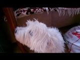 собаку бесит музыка из кф челюсти