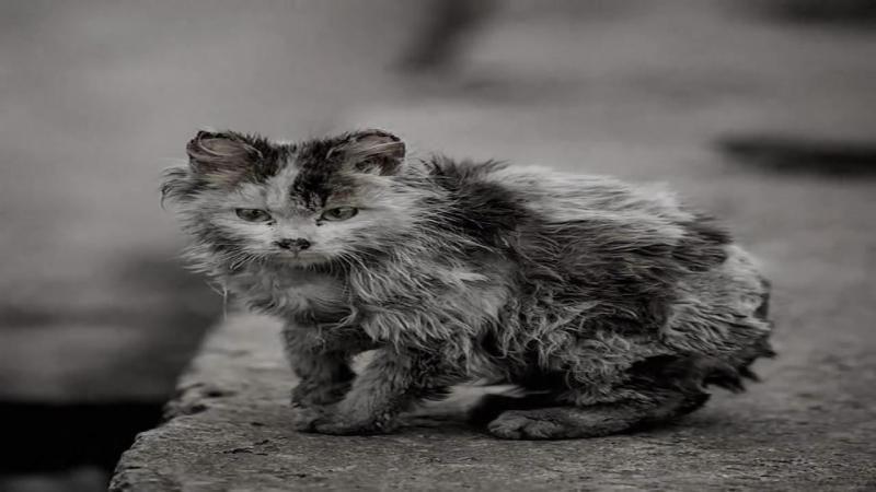 Уродливый кот (Стихотворение)