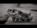 Уродливый кот Стихотворение