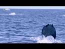 NG Там где встречаются океаны - Where Oceans Collide (2017)
