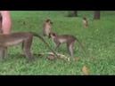 Monkey time in Gambia Гамбия отдых_в_Гамбии
