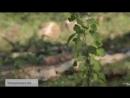 РУССКИЙ КАПКАН новый фильм 2019 ВЫРУБКА ЛЕСОВ В СИБИРИ и ПРИМОРЬЕ КАПКАН ДЛЯ КИ