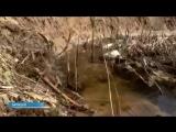 Саратовская область. Останки погибших в Сталинградской битве дедов валяются в овраге вперемешку с бытовым мусором.