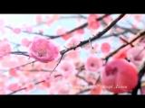 Сердце сакуры - Эдуард Дэлюж (читает автор)