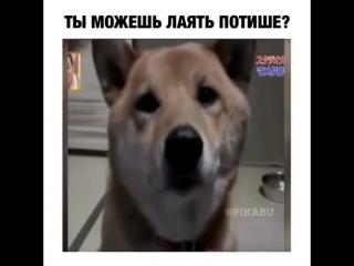 Собака лает всё тише, когда хозяйка её об этом просит