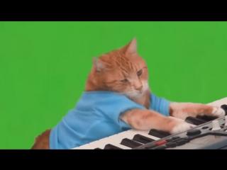 Котик играющий на синтезатор, на зеленом фоне.