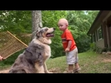 Собака, играющая с ребёнком, делает внезапное движение, которое заставляет маму и папу вздрогнуть