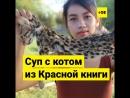 Блогеры поедают животных из Красной книги