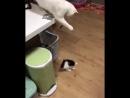 Такого вы больше нигде не увидите: Кошка мать играет с котёнком!