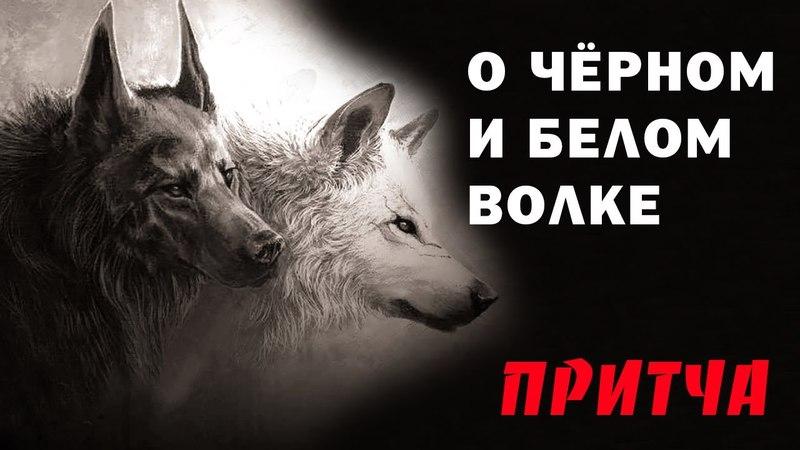 О черном и белом волке - Притча североамериканских индейцев - О добре и зле