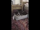 Видео с Instagram Stories ›› 18 февраля