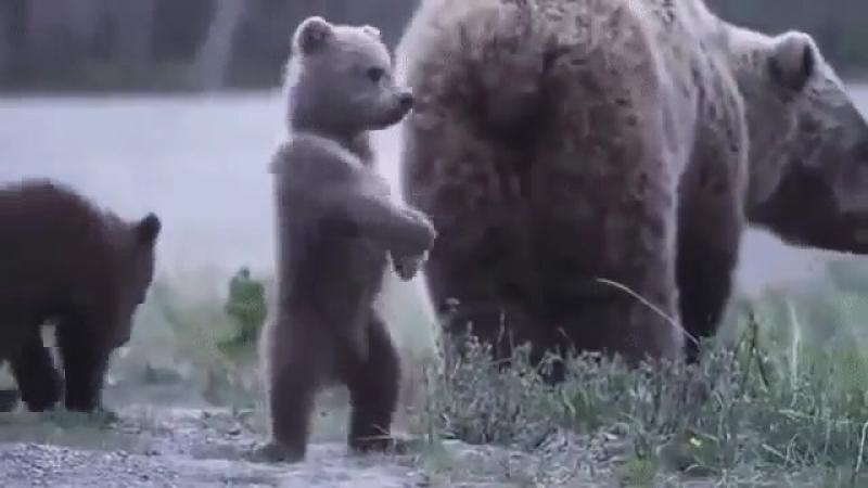 Иди сюда, я тебя с мамой познакомлю)