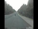 Вот такого милого зверя мы повстречали на дороге Карелии,  не успели даже ипугаться??????