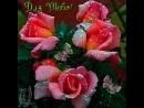 Doc145784557_471574400.mp4
