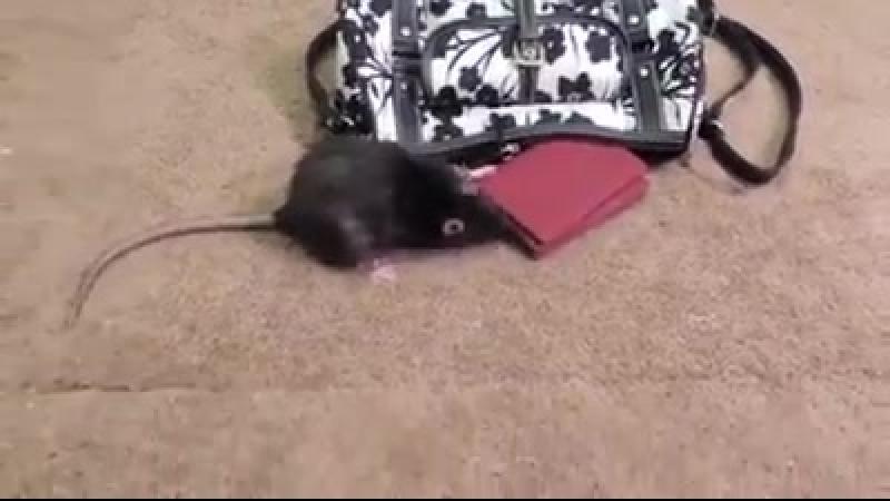 Pero que ratón este!!