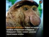 Нотариусы Красноярска