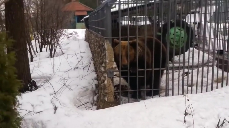 Медведь и алкаши не лезь дебил она тебя сожрет