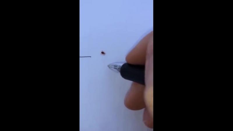 Законопослушный жук) Высокие технологии