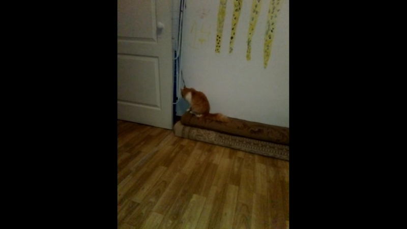 🐈 котик хулиган