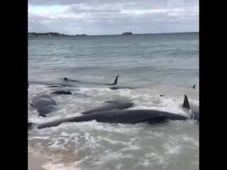 Дельфины выбросились на берег