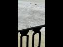 Чайка на канале Грибоедова