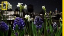 Watch a Garden Come to Life in This Absolutely Breathtaking Time Lapse Short Film Showcase
