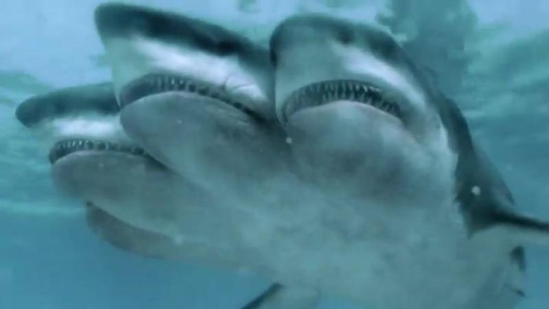 Нападение пятиглавой акулы-ужасы 2017