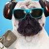 Радио Сибирь FM 103,7