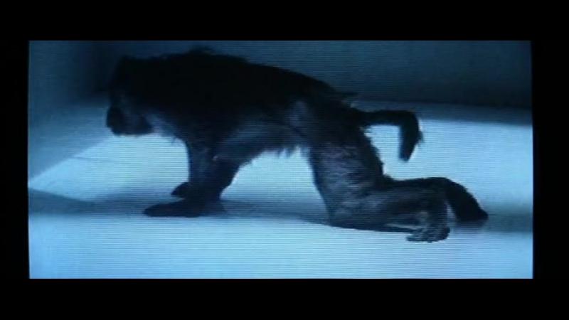 ◄The Hunger(1983)Голод*реж.Тони Скотт
