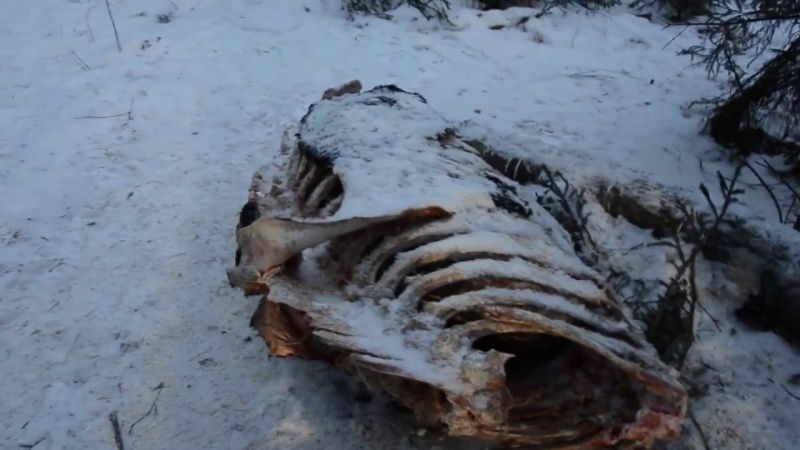 Вблизи Алапаевска нашли жертву эпидемии туберкулеза