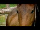 BBC Эдвардианская ферма 09 Май Познавательный история исследования 2010