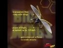 «Человек-муравей и Оса». Рекламный ролик 7