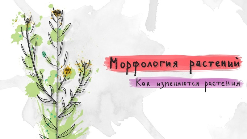 Как изменяются растения. Морфология растений - 2