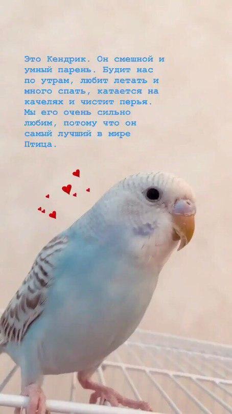 Яна Енжаева | Москва