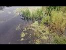 Масовый мор рыбы в реках Оскол и Валуй