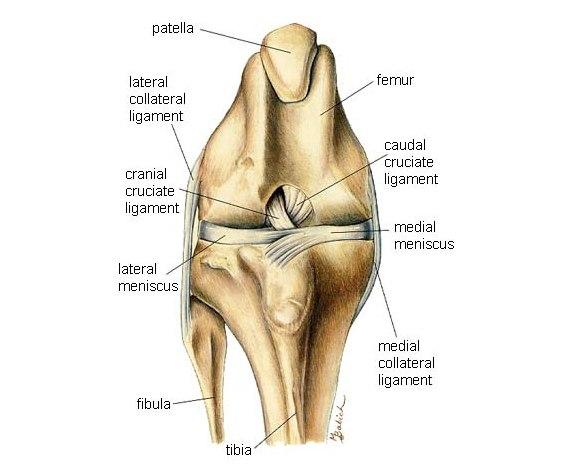 спиртавой компрес плечавого сустава после травмы