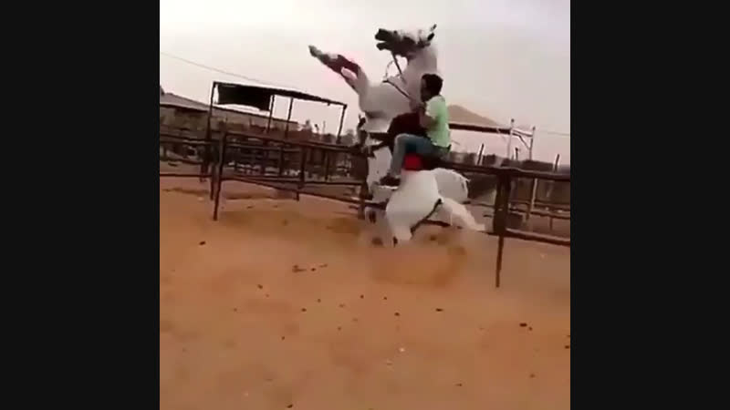 Арабский Скакун🔥🔥🔥