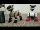 Танцующие собачки Aibo