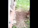 Фильм ужасов Охота на зайца. В роли зайца Тося.