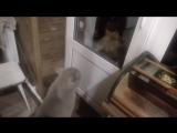 Открой мне дверь,Говорящий кот