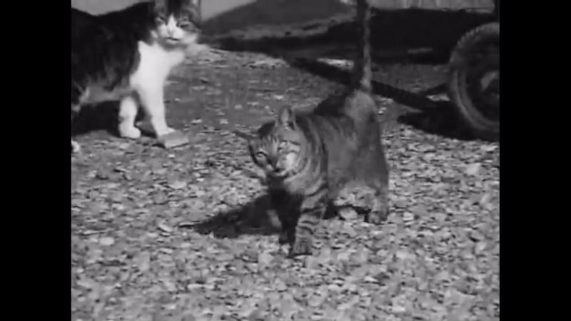 Histoire de chats (Jacques Thévoz, 1967)