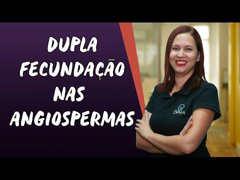 Dupla Fecundação nas Angiospermas - Brasil Escola