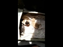 Котята в черешневой косточке