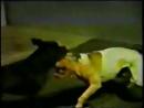 РЭМБО-ДЖАМБО часть 1 GARLAUNIS RAMBOCUNES IRON KID ROM vs RADONJICS JUMBO ROM
