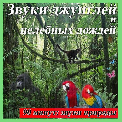 Звуки Природы альбом Звуки джунглей и целебных дождей: 90 минут: звуки природы