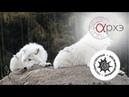 Дмитрий Политов: Генетическое разнообразие Canis lupus