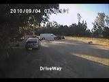 Нападение койота на мелкую собаку