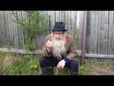 Психология Дед Архимед Песенка про жопу Благодарен за репосты