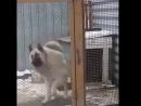 Татарский пес отжигает 😃